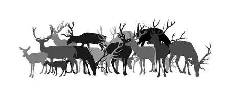 Deer vector silhouette illustration isolated on white background. Reindeer, proud Noble Deer family in forest or zoo. Powerful buck with huge neck and antlers standing. Red deer grazing grass.