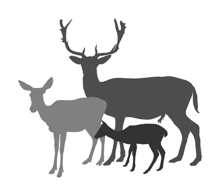 Deer  family vector silhouette isolated on white background. Reindeer couple with fawn. Proud Noble Deer male in forest or zoo. Powerful buck with huge neck and antlers standing on alert looking. Illustration