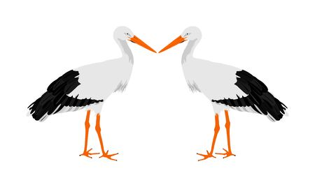 Stork couple in love vector illustration isolated on white background. Visitant, bird migration symbol. Baby time. Spring coming symbol.