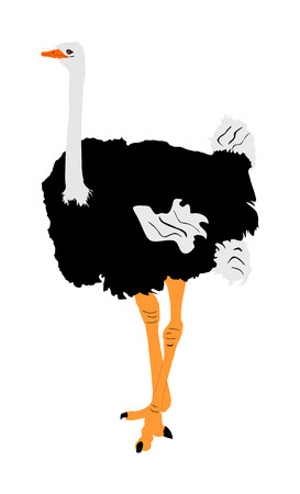 Ostrich vector illustration isolated on white background. Cartoon character. Big bird from Africa. Иллюстрация