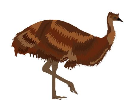 Emu bird vector illustration isolated on white background. Animal cartoon character. Australian endemic emu. Zoo bird. Wild animal from Australia. Cute ostrich. Ilustracja