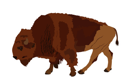 Bison vector illustration isolated on white background. Portrait of Buffalo, symbol of America. Strong animal, Indian culture. Иллюстрация