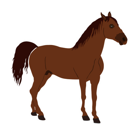 Elegant racing horse portrait vector illustration isolated on white background. Hippodrome sport event. Entertainment and gambling on sport event. Equestrian riding horse for jumping over barrier show