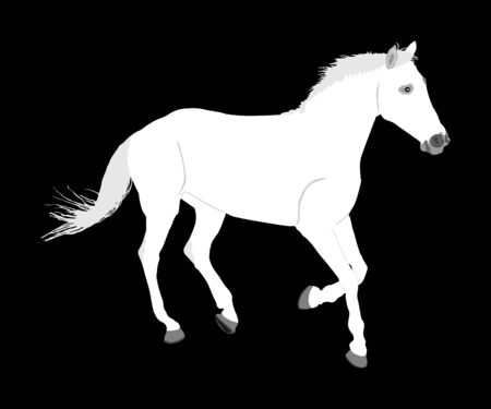 Elegant white horse in gallop isolated on black background. Horse race. Farm animal. Symbol of beautiful animal. Casual ambler horse stallion. Иллюстрация