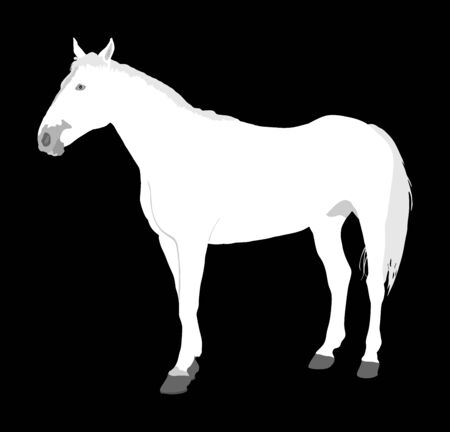 Elegant white horse isolated on black background. Horse race. Farm animal. Symbol of beautiful animal. Casual ambler horse stallion. Фото со стока - 129274163