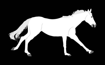Elegant white horse in gallop isolated on black background. Horse race. Farm animal. Symbol of beautiful animal. Casual ambler horse stallion. Illustration