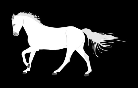 Elegant racing white horse in gallop vector illustration isolated on black background. Hippodrome sport event. Entertainment and gambling sport. Equestrian riding horse for jumping over barrier show