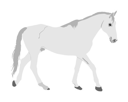 Elegant racing white horse portrait vector illustration isolated on white background. Hippodrome sport event. Entertainment and gambling sport. Equestrian riding horse for jumping over barrier show