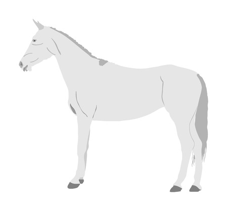 Elegant racing white horse portrait vector illustration isolated on white background. Hippodrome sport event. Entertainment and gambling sport. Equestrian riding horse for jumping over barrier show 免版税图像 - 123769285