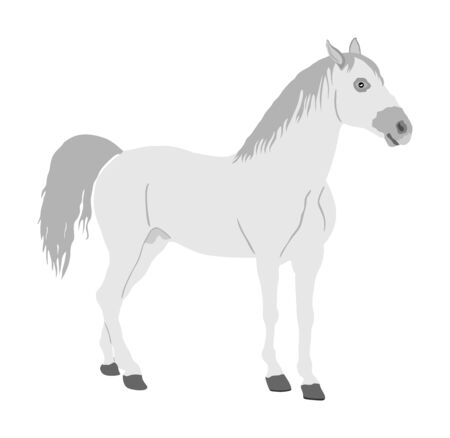 Elegant racing white horse in gallop portrait vector illustration isolated on white. Hippodrome sport event. Entertainment and gambling. Equestrian riding horse for jumping over barrier show. Noble animal.