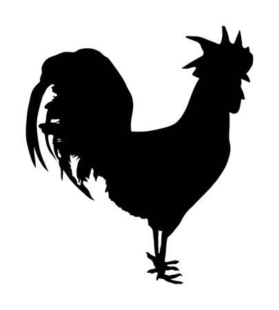 Elegante Hahnvektorschattenbildillustration lokalisiert auf weißem Hintergrund. Männliches Huhn Bio-Lebensmittel. Bauernhof Chantry Hahn. Thailand-Kampfvogel. Bio-Lebensmittelsymbol. Vektorgrafik