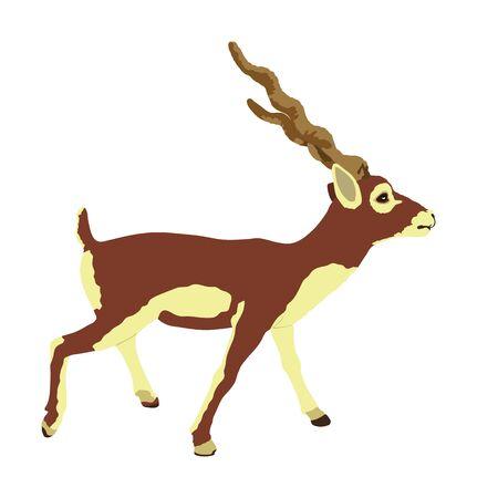 Blackbuck antelope vector illustration isolated on white background. Indian antilope Cervicapra. Illustration