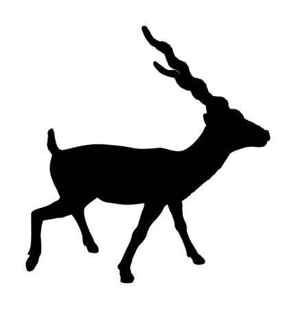 Blackbuck antelope vector silhouette illustration isolated on white background. Indian antilope Cervicapra.