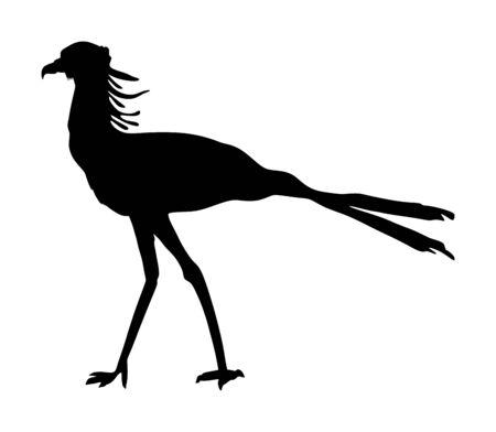 Secretary bird vector silhouette illustration isolated on white background.(Sagittarius Serpentarius).  Big African bird hunting in the Savannah.
