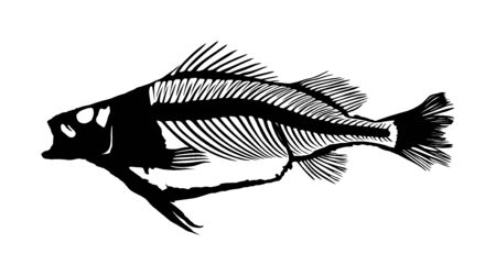 Fish skeleton vector silhouette illustration isolated on white background. Dead fish bone symbol. Fishbone fossil. Diet hungry concept. Ilustrace