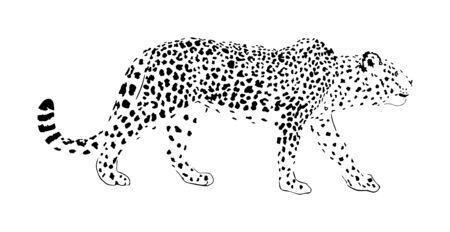 Illustrazione di vettore del leopardo isolato su priorità bassa bianca. Gatto selvatico in caccia in agguato pregare. Simbolo della pantera. Predatore silenzioso, attrazione nel parco zoo. Grande gatto selvatico dall'Africa e dall'Asia. carnivoro solitario. Vettoriali