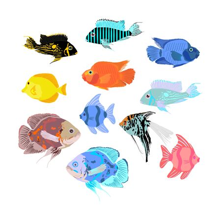 Aquarium exotic fish collection, under water world. Oscar fish vector illustration isolated on white background. Coral reef Pisces. Colorful fish. Zebrasoma yellow tag, Angel fish, red parrot, clown.