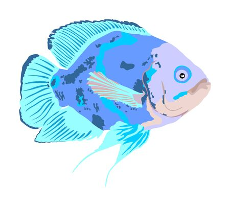 Oscar fish vector illustration isolated on white background. Aquarium fish, exotic under water world. Coral reef Pisces. Aquarium fish.