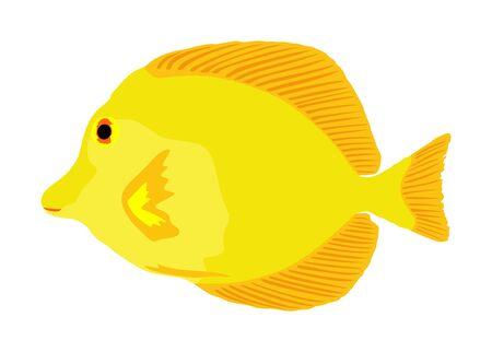 Yellow tang vector illustration isolated on white background. Coral reef fish. Zebrasoma aquarium fish. 일러스트