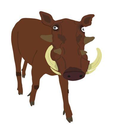 Warthog vector illustration isolated on white background. Bush Pig. Wild boar symbol. African boar isolated, desert warthog icon. Wild animals of Africa. Savannah nature wildlife. Pumba hog.