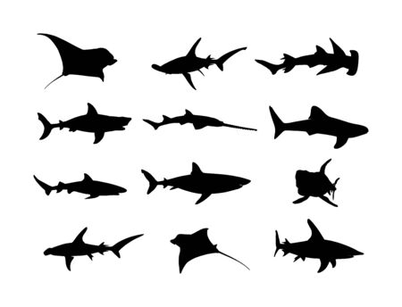 Collection of shark silhouette isolated on white background. Great white, bull shark, devil ray, hammerhead, stingray, manta ray, reef shark symbol, whale shark, saw fish. Predator fish in sea, ocean.