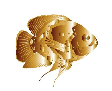 Goldfish fulfills desires. Oscar fish vector illustration isolated on white background. Aquarium fish, exotic under water world. Coral reef Pisces. Aquarium  golden fish symbol of happiness and wealth Ilustração