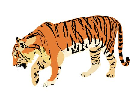Tiger vector illustration isolated on white background. Big wild cat. Siberian tiger (Amur tiger - Panthera tigris altaica) or Bengal tiger. Tatoo sign. Zoo attraction.