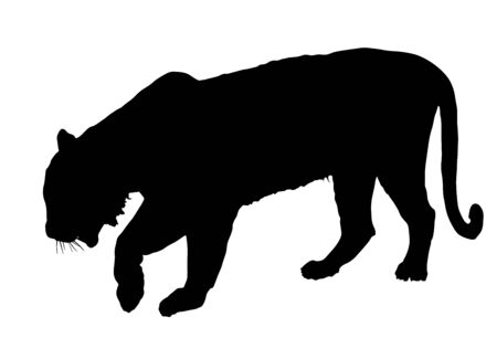 Tiger vector silhouette illustration isolated on white background. Big wild cat. Siberian tiger (Amur tiger - Panthera tigris altaica) or Bengal tiger. Tatoo sign. Vektorové ilustrace