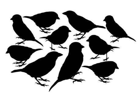 Big collection of Sparrow bird vector silhouette illustration isolated on white background. Little city bird silhouette portrait.