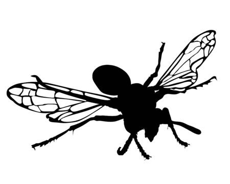 Wasp vector silhouette illustration isolated on white background. Honey bee vector silhouette symbol. Insect shadow. Hornet silhouette. Poison animal.