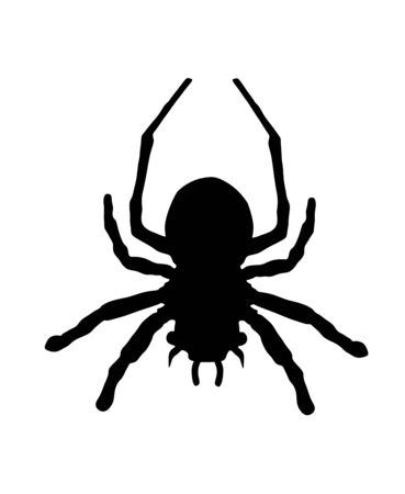Spider symbol. Tarantula vector silhouette isolated on white background. Arachnophobia, nightmare.