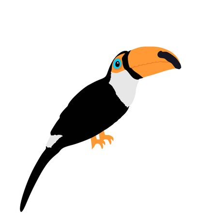 Toucan vector illustration isolated on white background. Exotic bird from America.