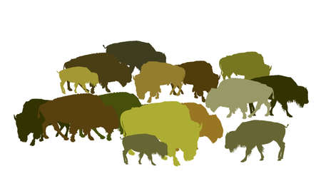 Drove of Bison vector illustration isolated on white background. Herd of Buffalo, symbol of America. Strong animal, Indian culture. Bison family shadow.