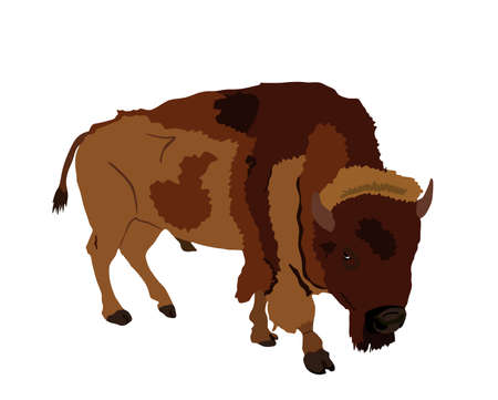 Bison vector illustration isolated on white background. Portrait of Buffalo male, symbol of America. Strong animal, Indian culture. Иллюстрация