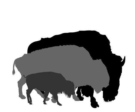 Bison couple with kid vector silhouette isolated on white background. Portrait of Buffalo family, male and female, symbol of America. Strong animal, Indian culture. Иллюстрация