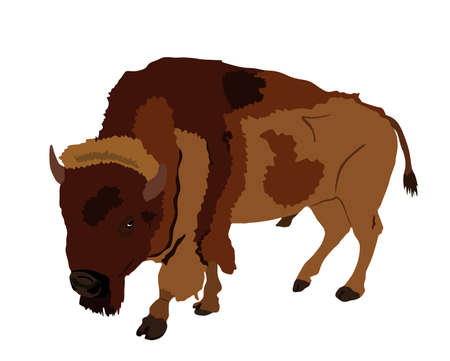 Bison vector illustration isolated on white background. Portrait of Buffalo male, symbol of America. Strong animal, Indian culture. Illusztráció