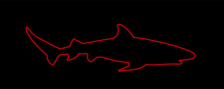 Reef shark line contour vector isolated on black background. Sea predator. Danger on beach alert. Open jaws of beast. Fear for divers and swimmers. Under water alert. Ocean killer.