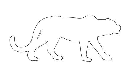 Leopard line contour vector illustration isolated on white background. Wild cat in hunt lurking pray. Panther symbol. Silent predator. Big wild cat from Africa and Asia.