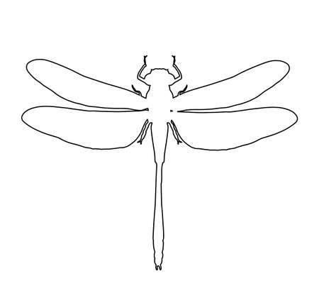 Dragonfly vector line contour illustration isolated on white background. Insect animal symbol.
