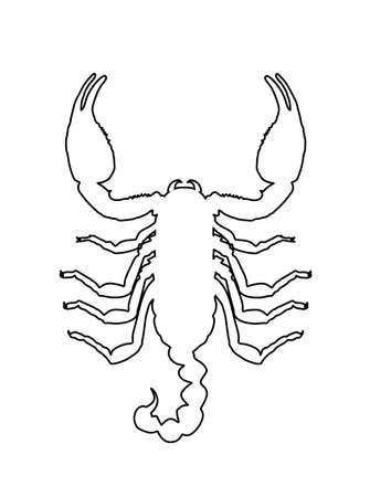 Scorpion vector line contour illustration isolated on white background. Deadly venom animal symbol. Poison animal. 向量圖像
