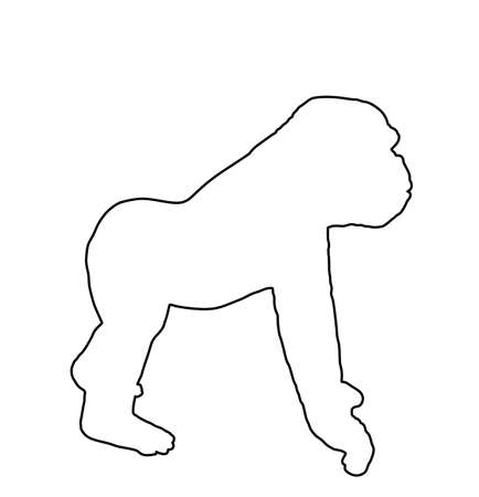Gorilla vector line contour silhouette isolated on white background. Big monkey symbol. Wild life from Africa. Family of primates. Male Gorilla, King Kong sign. Фото со стока - 153019367