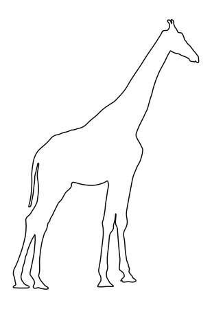 Giraffe line contour vector illustration isolated on white background. African animal.  Tallest animal. Safari trip attraction. Big five. Giraffe in standing pose portrait . Фото со стока - 153019369