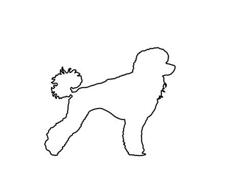 Toy Poodle vector line contour. Portrait of Royal Poodle vector silhouette illustration isolated. French black poodle standing. Beware of dog.