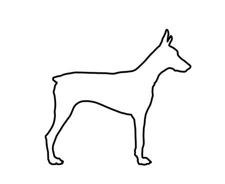 Doberman Pincher dog line contour vector illustration isolated. German military guardian dog for detecting smuggling drugs. Beware of dog sign.   Best friend and guard dog. 向量圖像