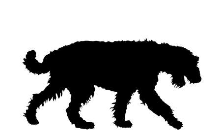 Portrait of Airedale Terrier vector silhouette illustration isolated. Big terrier breed. Beware of purebred dog show champion. Best friend. Alert, guard attention. Иллюстрация