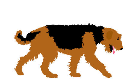 Portrait of Airedale Terrier vector illustration isolated. Big terrier breed. Beware of purebred dog show champion. Best friend. Alert, guard attention.