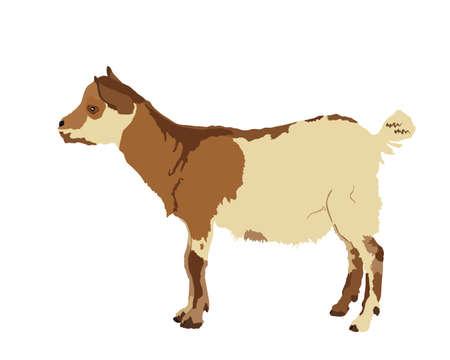 Goatling vector illustration isolated on white background. Little baby goat kid farm animal. Иллюстрация