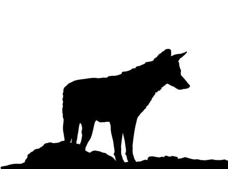 Jackal vector silhouette isolated on white background. Coyote observe pray silhouette. Иллюстрация