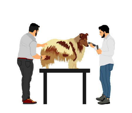 Professional grooming team hairdressing Rough Collie champion dog on desk in groom saloon vector illustration isolated on white background. Hygiene health care for pet.