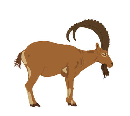 Goat ibex vector illustration isolated on white background. Mountain wildlife animal. Фото со стока - 153644746